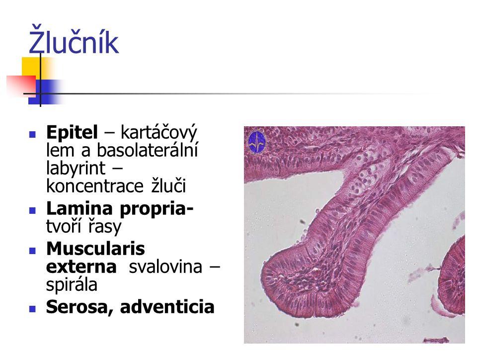 Žlučník Epitel – kartáčový lem a basolaterální labyrint – koncentrace žluči. Lamina propria- tvoří řasy.