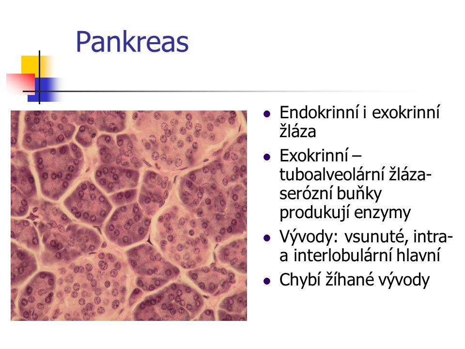 Pankreas Endokrinní i exokrinní žláza