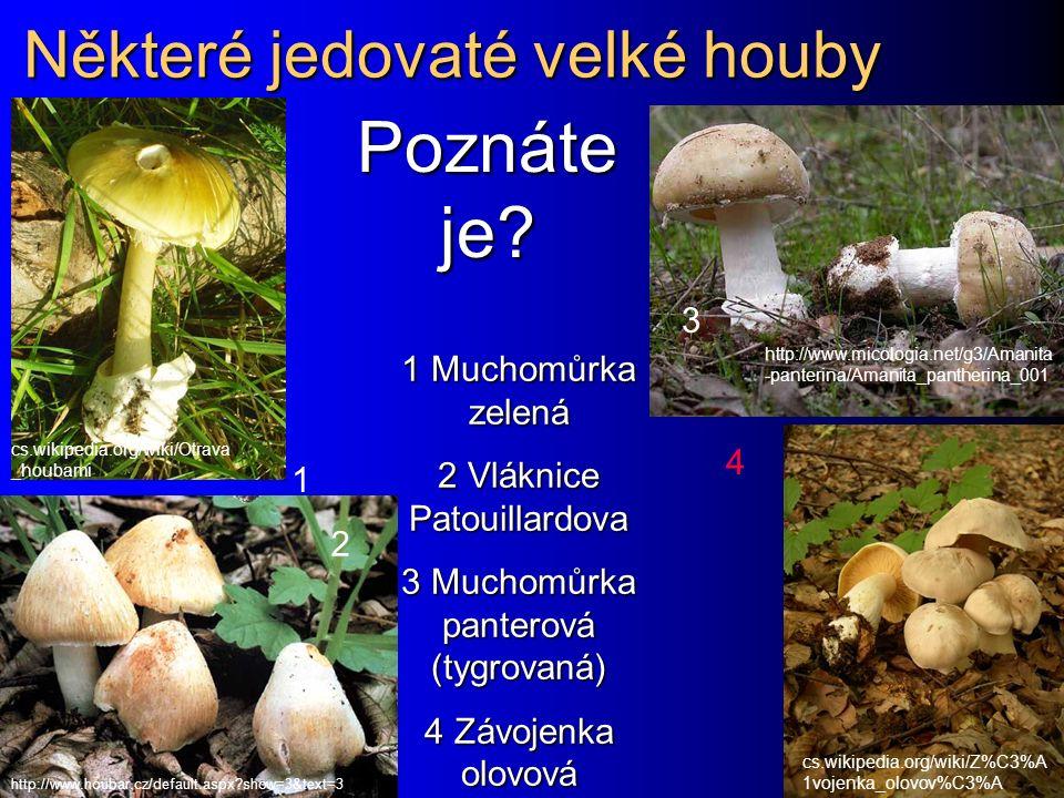 Některé jedovaté velké houby
