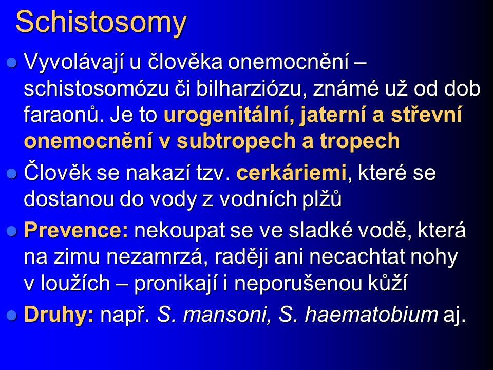 Schistosomy