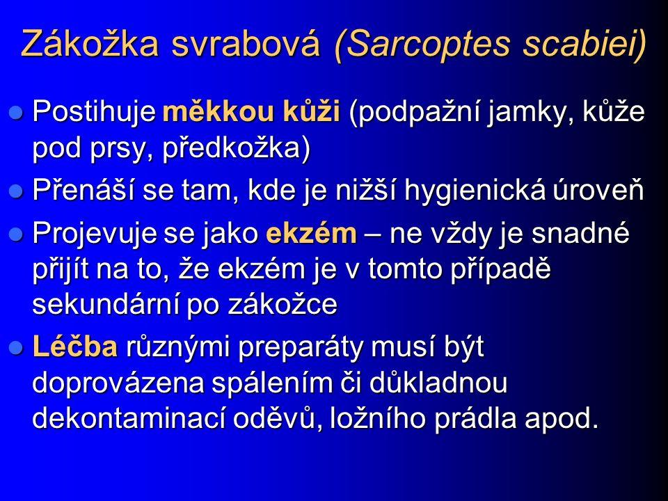 Zákožka svrabová (Sarcoptes scabiei)
