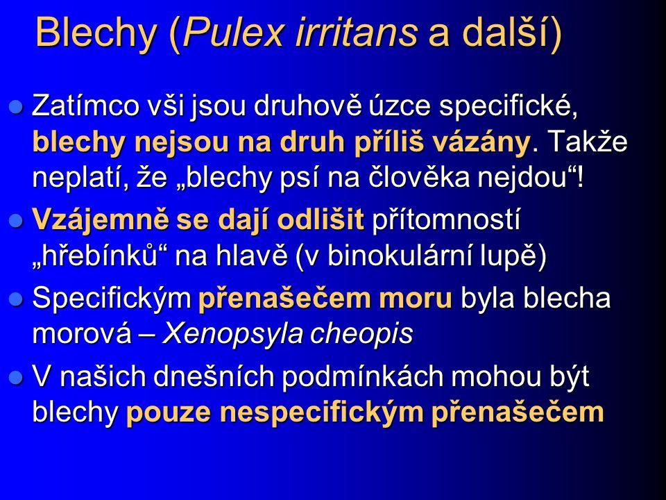 Blechy (Pulex irritans a další)