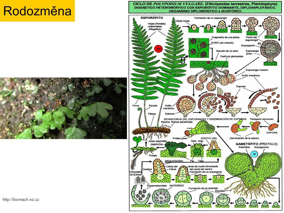 Rodozměna http://biomach.wz.cz