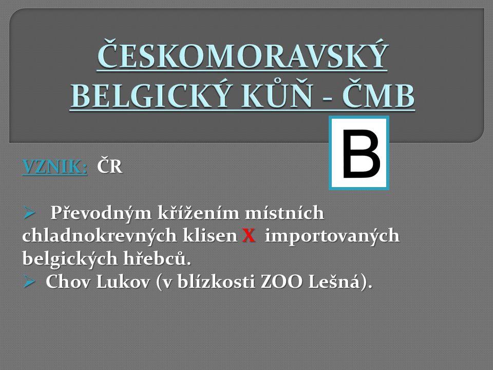 ČESKOMORAVSKÝ BELGICKÝ KŮŇ - ČMB