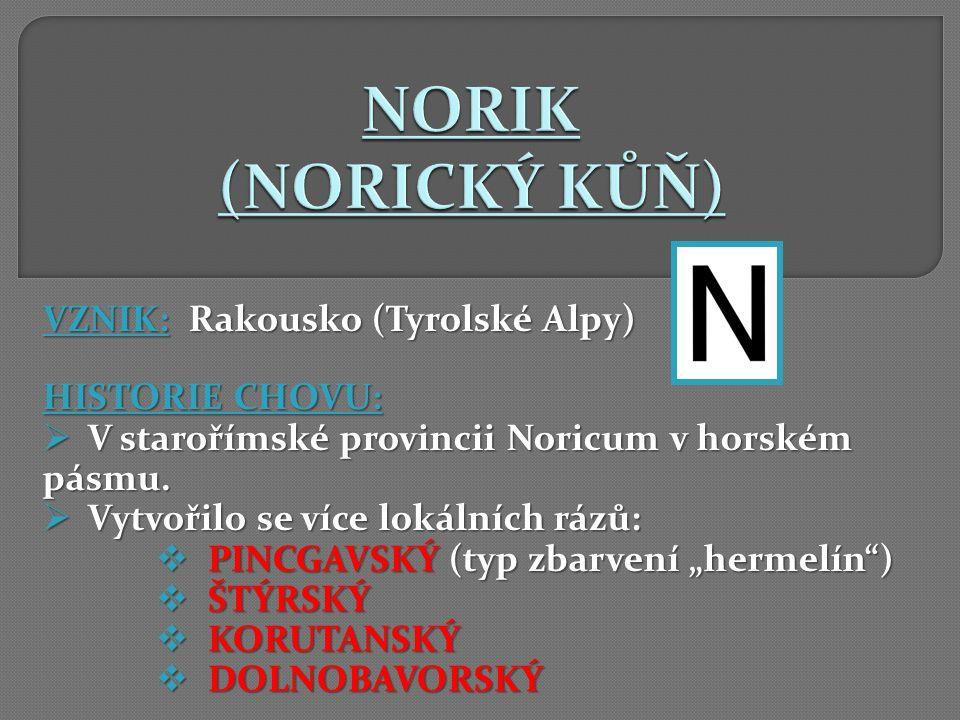 NORIK (NORICKÝ KŮŇ) VZNIK: Rakousko (Tyrolské Alpy) HISTORIE CHOVU: