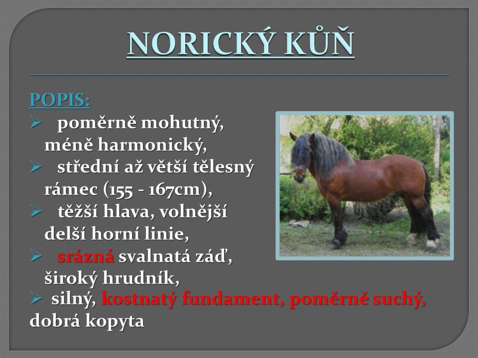 NORICKÝ KŮŇ POPIS: střední až větší tělesný rámec (155 - 167cm),