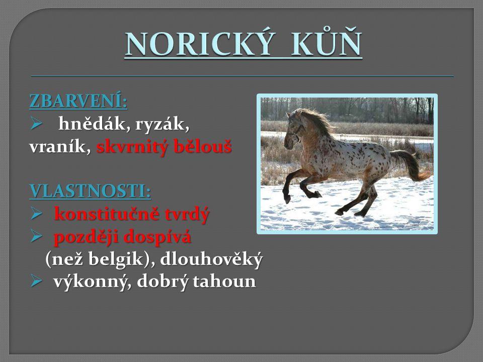 NORICKÝ KŮŇ ZBARVENÍ: hnědák, ryzák, vraník, skvrnitý bělouš