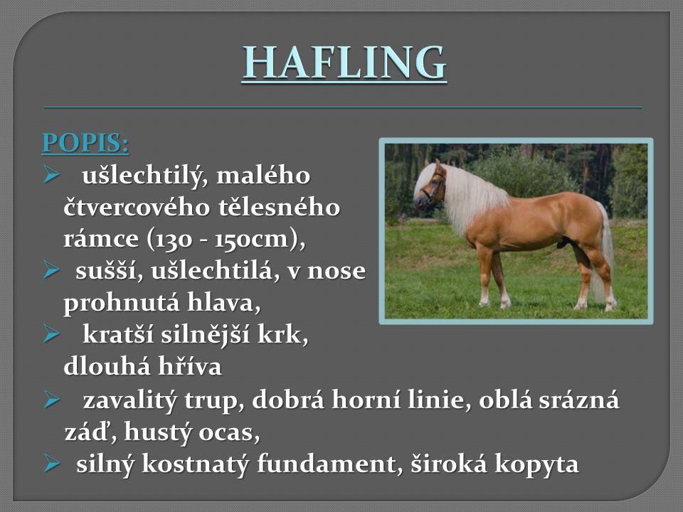 HAFLING POPIS: ušlechtilý, malého čtvercového tělesného rámce (130 - 150cm), sušší, ušlechtilá, v nose prohnutá hlava,