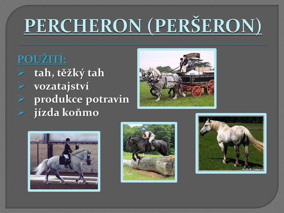 PERCHERON (PERŠERON) POUŽITÍ: tah, těžký tah vozatajství