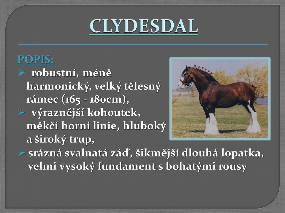 CLYDESDAL POPIS: robustní, méně harmonický, velký tělesný rámec (165 - 180cm), výraznější kohoutek, měkčí horní linie, hluboký a široký trup,