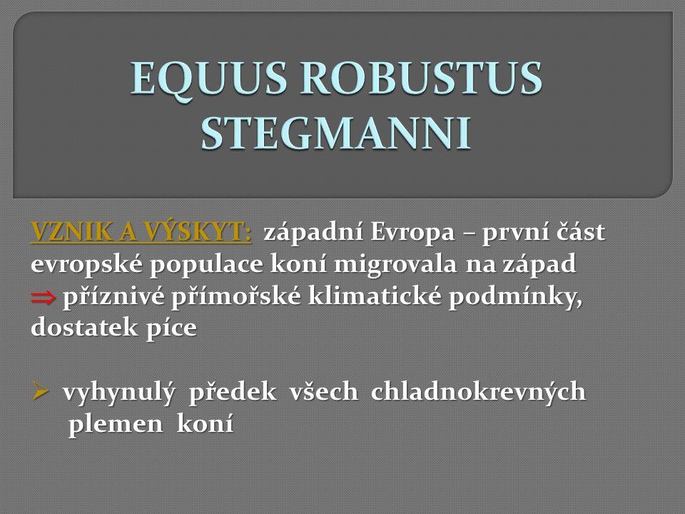 EQUUS ROBUSTUS STEGMANNI