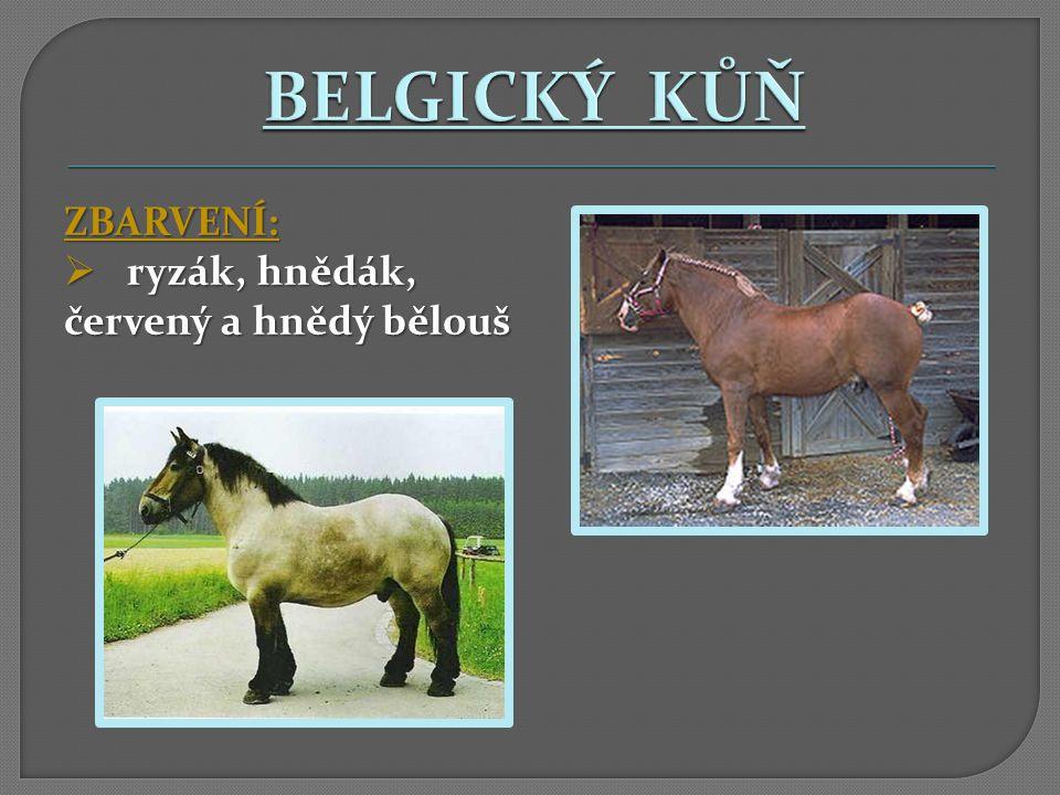 BELGICKÝ KŮŇ ZBARVENÍ: ryzák, hnědák, červený a hnědý bělouš