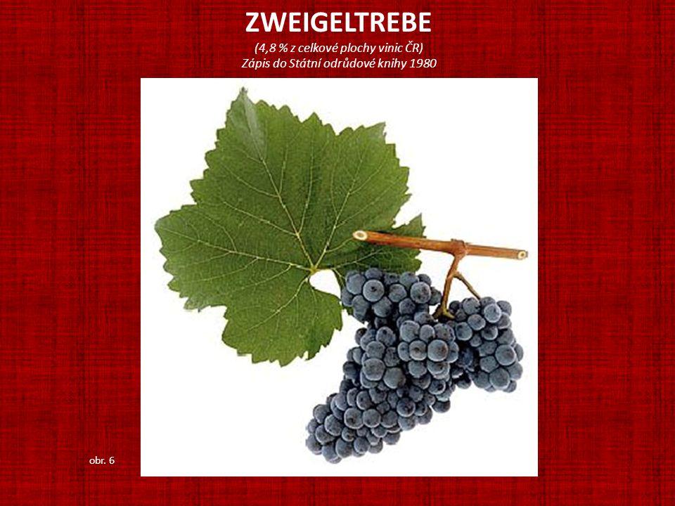 ZWEIGELTREBE (4,8 % z celkové plochy vinic ČR)
