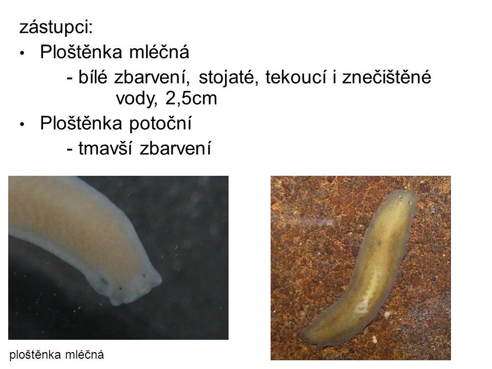 - bílé zbarvení, stojaté, tekoucí i znečištěné vody, 2,5cm
