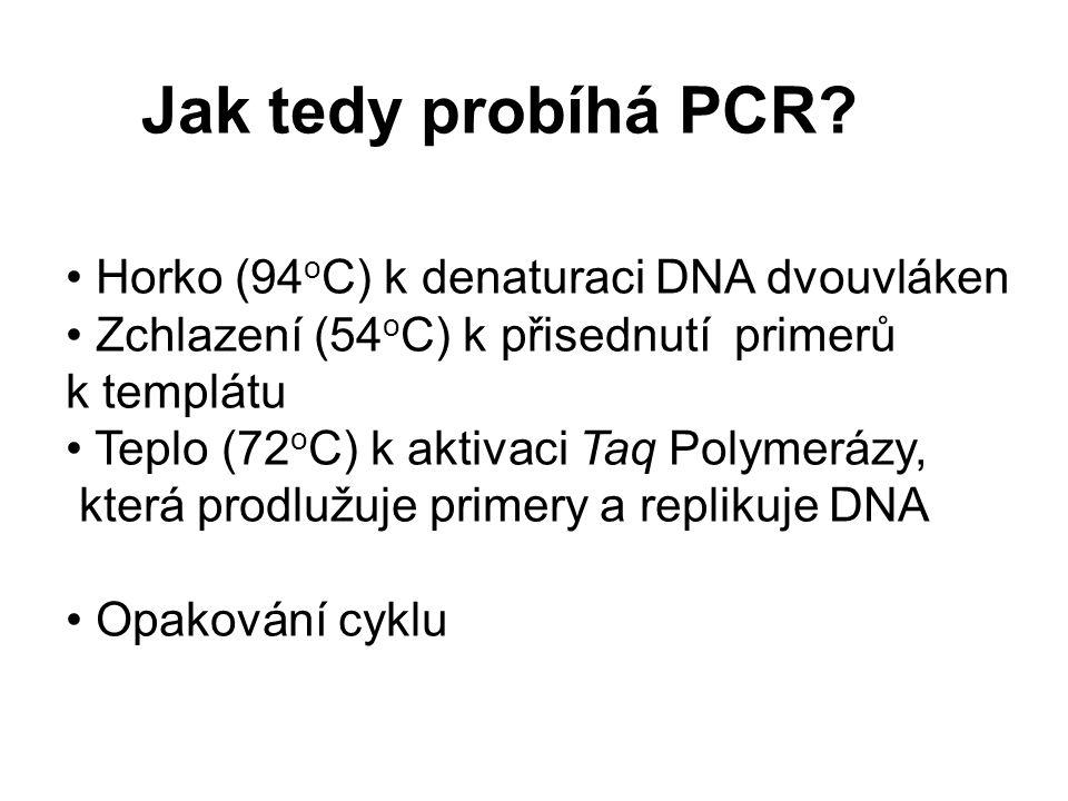 Jak tedy probíhá PCR Horko (94oC) k denaturaci DNA dvouvláken