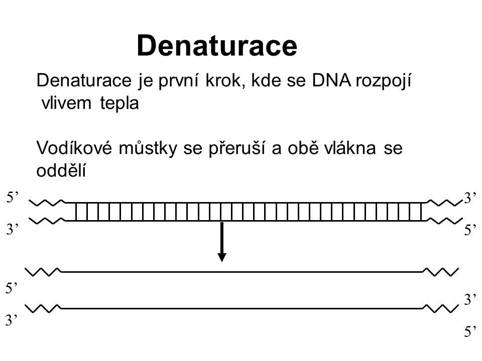 Denaturace Denaturace je první krok, kde se DNA rozpojí vlivem tepla