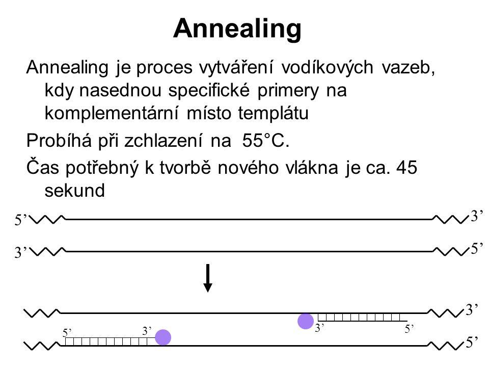 Annealing Annealing je proces vytváření vodíkových vazeb, kdy nasednou specifické primery na komplementární místo templátu.