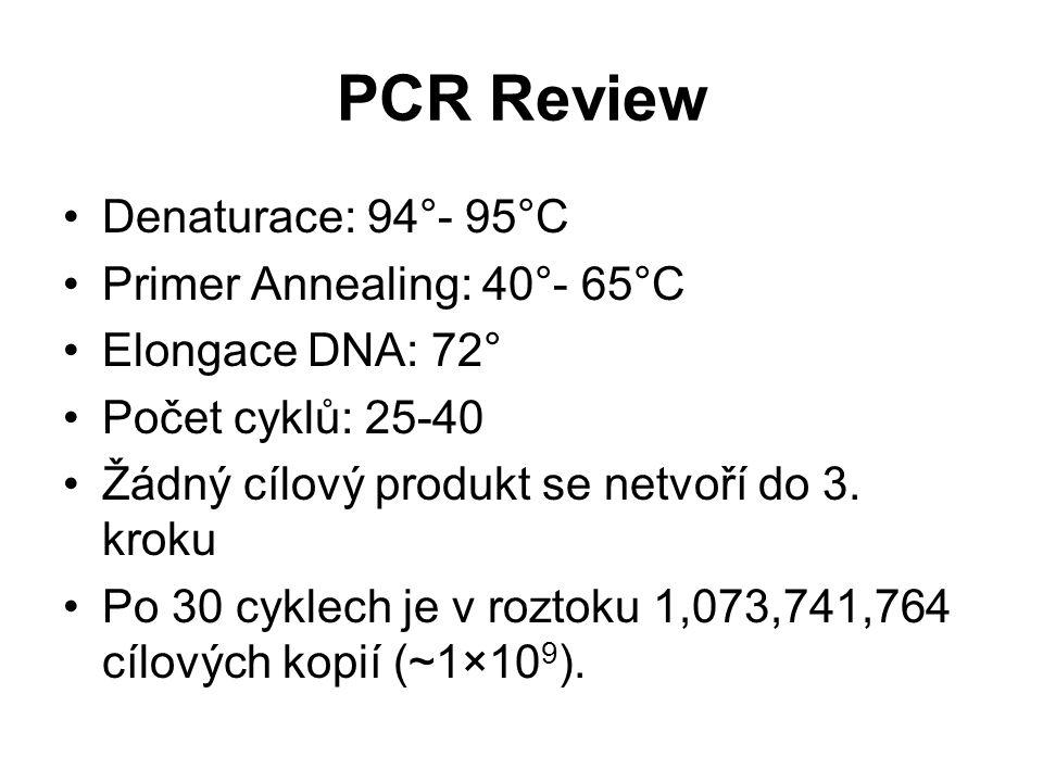PCR Review Denaturace: 94°- 95°C Primer Annealing: 40°- 65°C