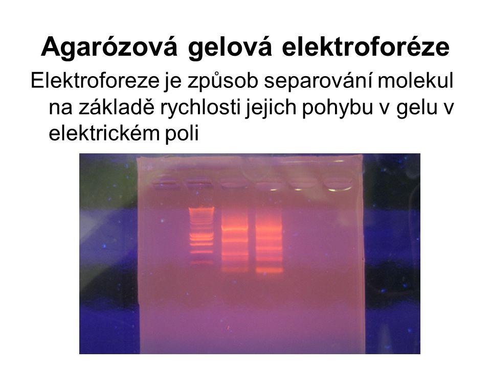 Agarózová gelová elektroforéze