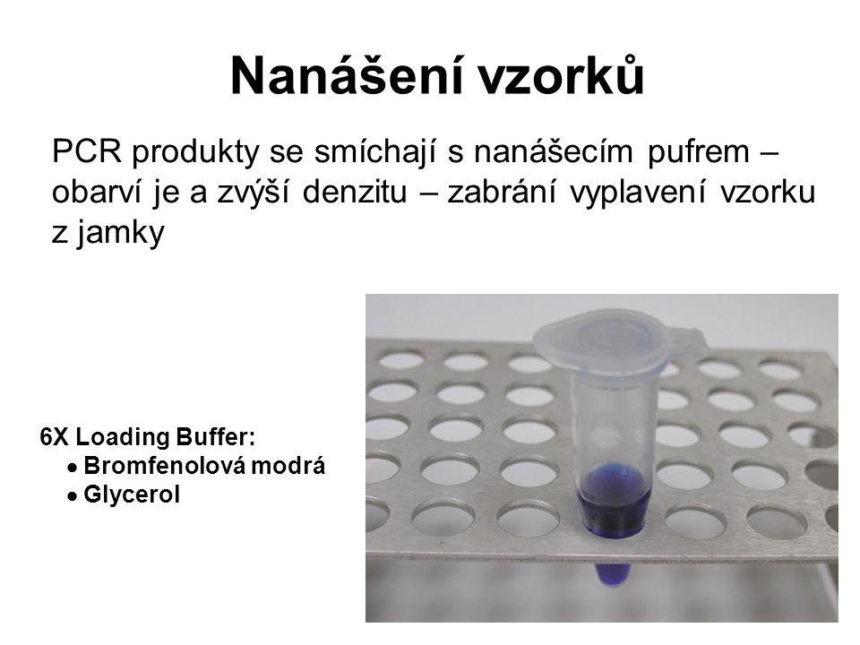 Nanášení vzorků PCR produkty se smíchají s nanášecím pufrem – obarví je a zvýší denzitu – zabrání vyplavení vzorku z jamky.
