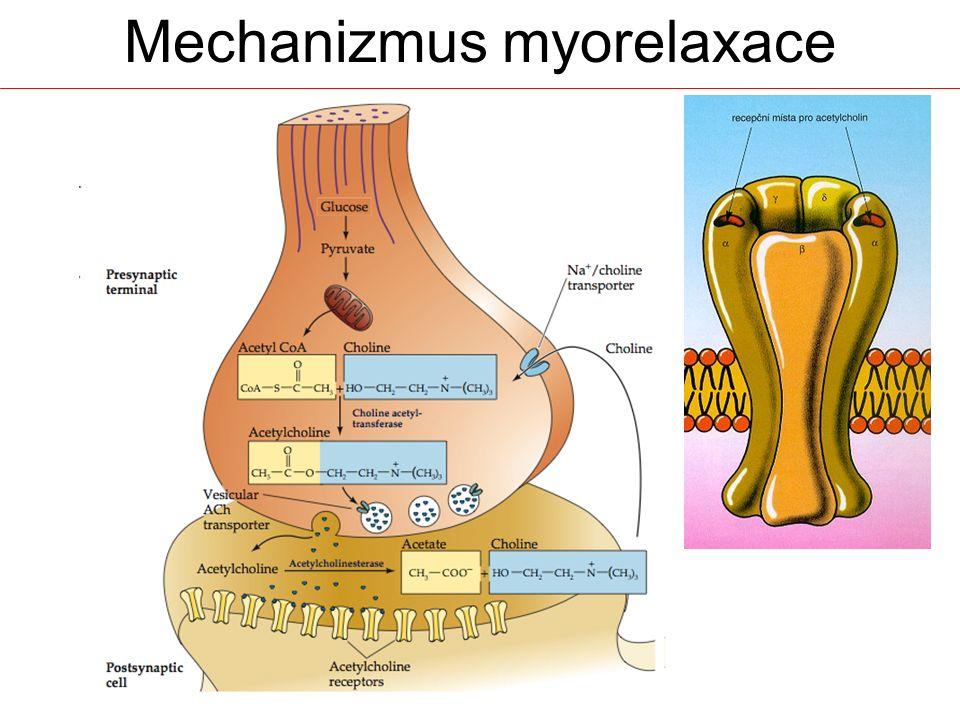 Mechanizmus myorelaxace