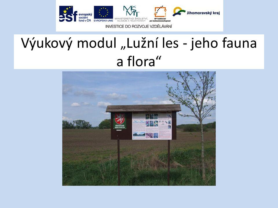 """Výukový modul """"Lužní les - jeho fauna a flora"""