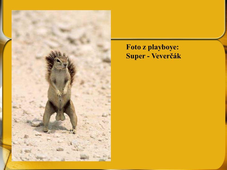 Foto z playboye: Super - Veverčák