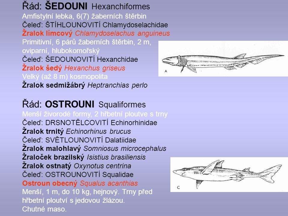 Řád: ŠEDOUNI Hexanchiformes