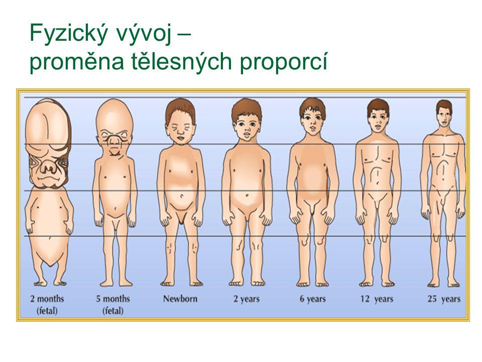Fyzický vývoj – proměna tělesných proporcí