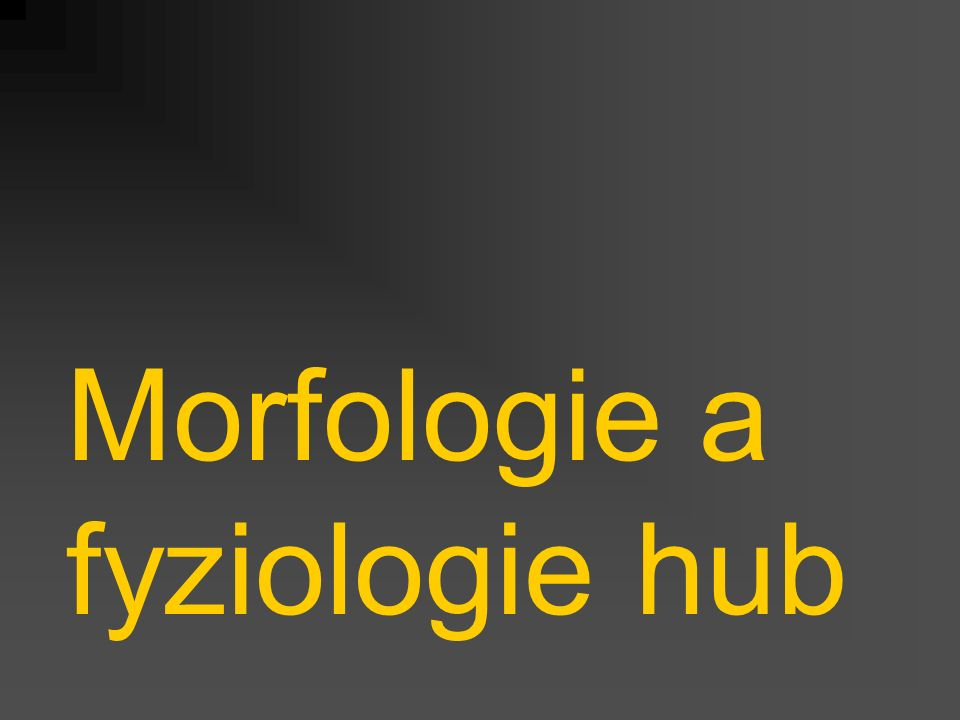 Morfologie a fyziologie hub