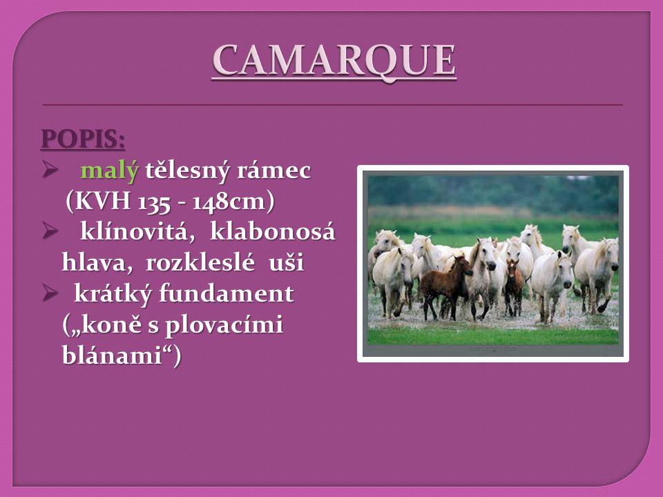 CAMARQUE POPIS: malý tělesný rámec (KVH 135 - 148cm)