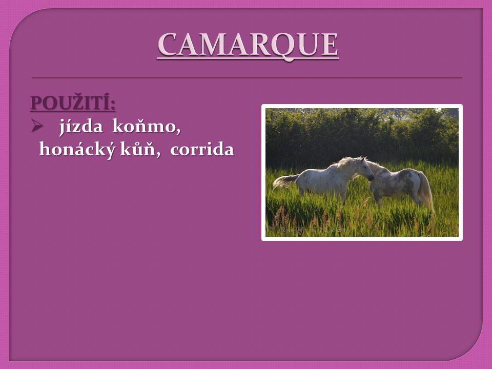 CAMARQUE POUŽITÍ: jízda koňmo, honácký kůň, corrida