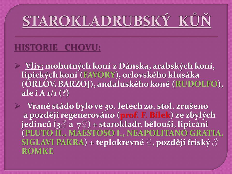 STAROKLADRUBSKÝ KŮŇ HISTORIE CHOVU: