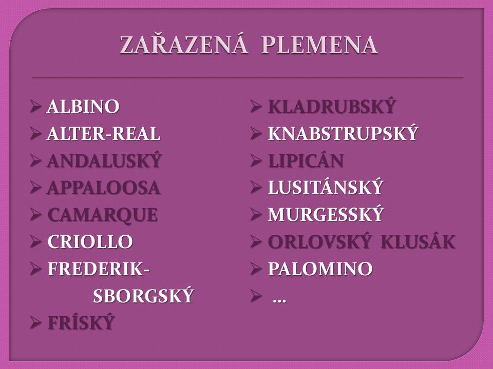 ZAŘAZENÁ PLEMENA ALBINO KLADRUBSKÝ ALTER-REAL KNABSTRUPSKÝ ANDALUSKÝ
