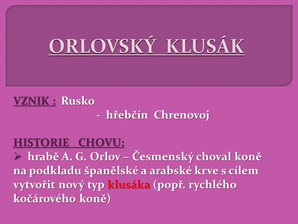 ORLOVSKÝ KLUSÁK VZNIK : Rusko - hřebčín Chrenovoj HISTORIE CHOVU: