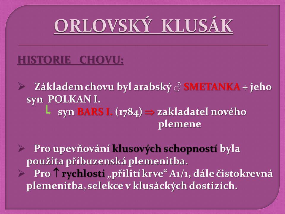 ORLOVSKÝ KLUSÁK HISTORIE CHOVU: