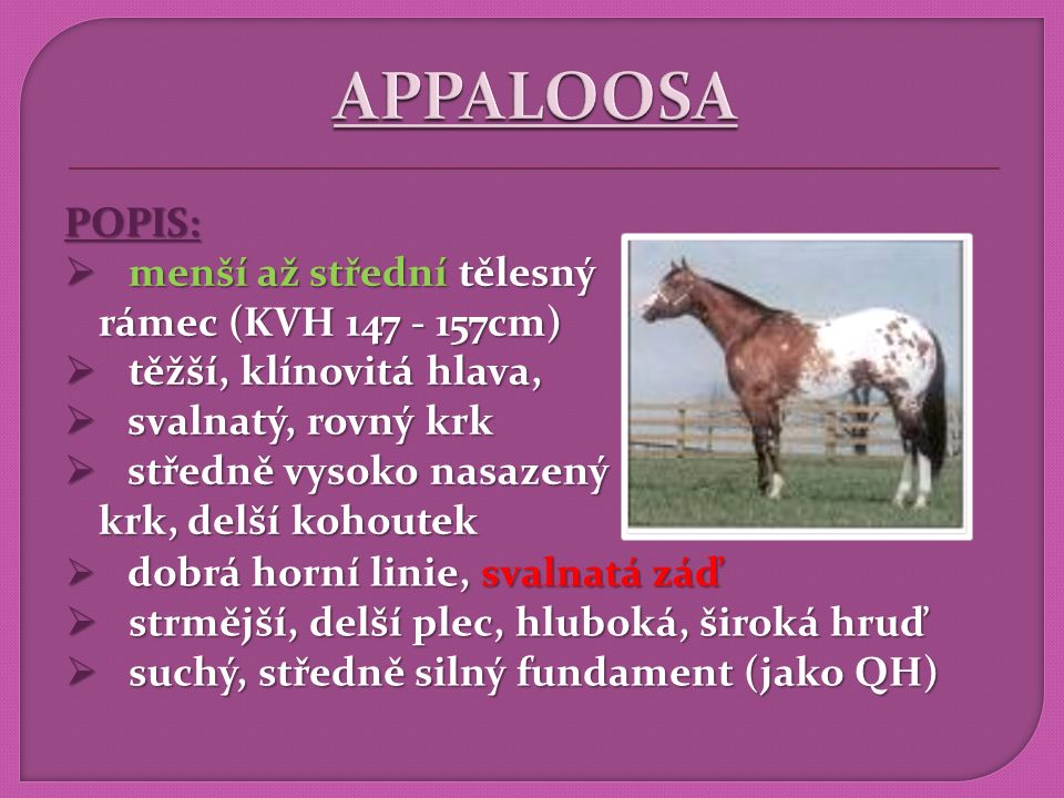 APPALOOSA POPIS: menší až střední tělesný rámec (KVH 147 - 157cm)