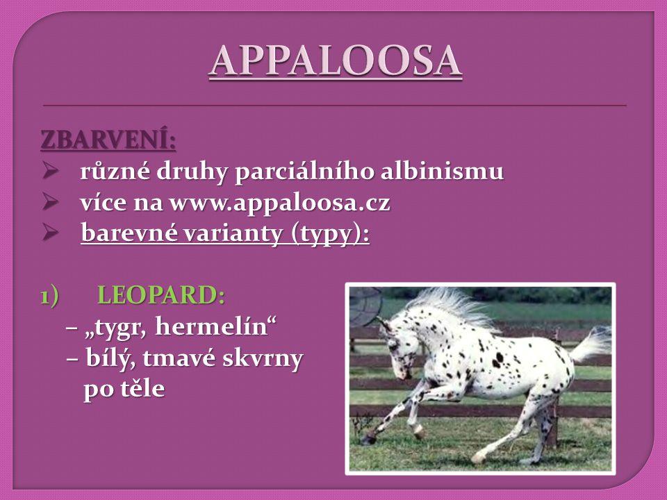 APPALOOSA ZBARVENÍ: různé druhy parciálního albinismu