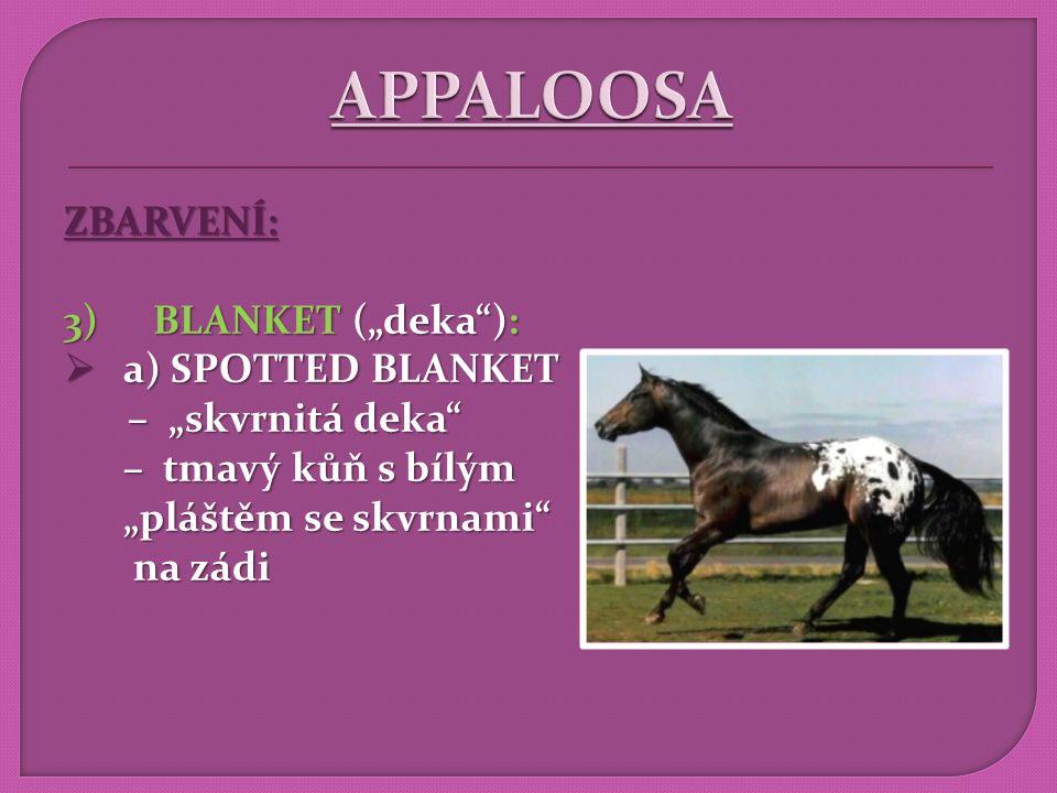"""APPALOOSA ZBARVENÍ: BLANKET (""""deka ): a) SPOTTED BLANKET"""