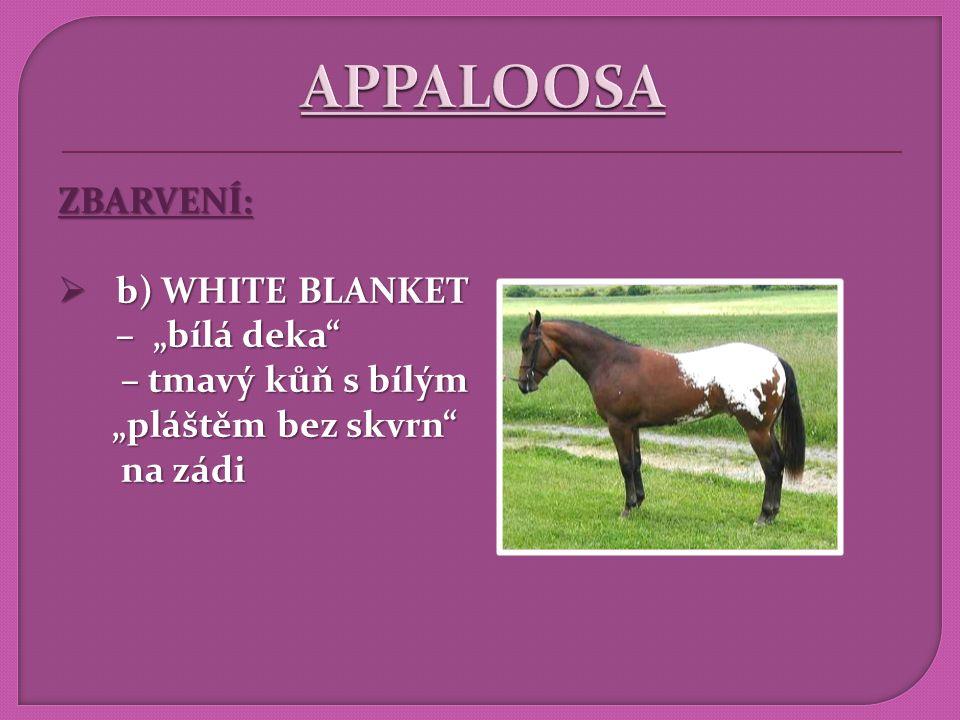 """APPALOOSA ZBARVENÍ: b) WHITE BLANKET – """"bílá deka – tmavý kůň s bílým"""
