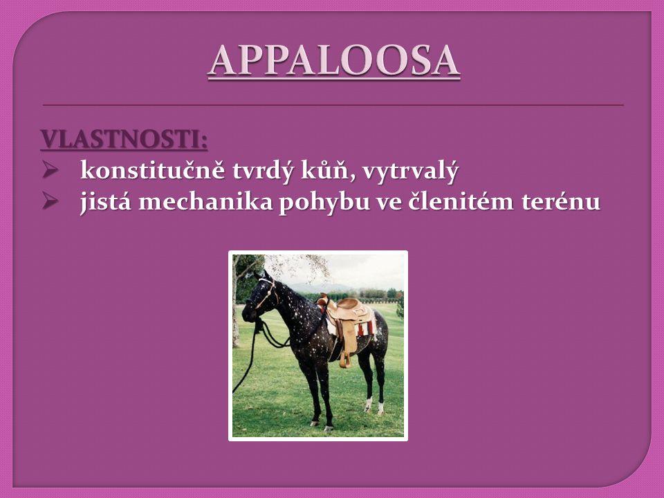 APPALOOSA VLASTNOSTI: konstitučně tvrdý kůň, vytrvalý