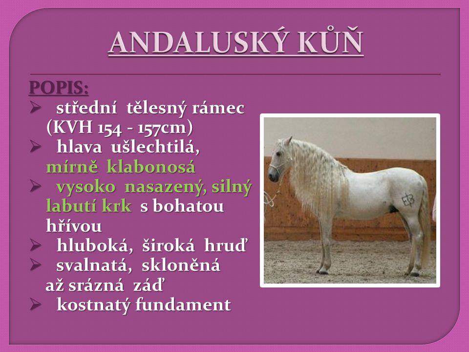 ANDALUSKÝ KŮŇ POPIS: střední tělesný rámec (KVH 154 - 157cm)