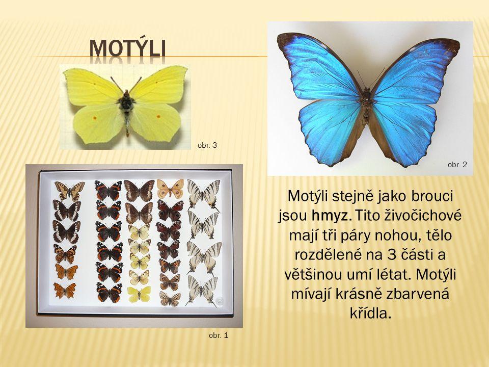 motýli obr. 3. obr. 2.
