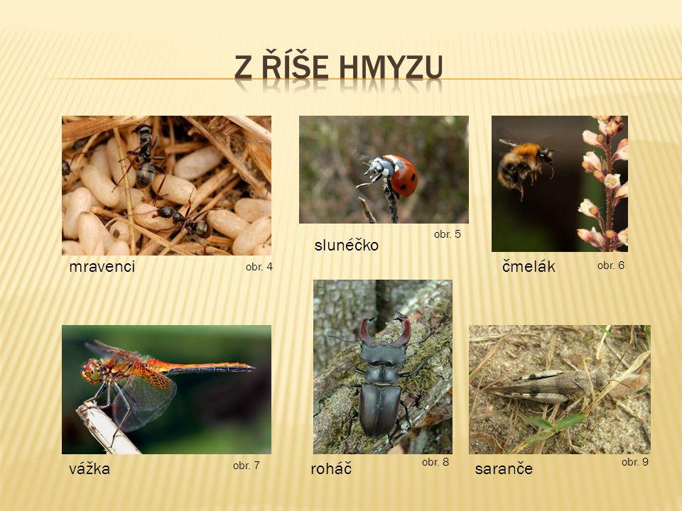 z říše hmyzu slunéčko mravenci čmelák vážka roháč saranče obr. 5