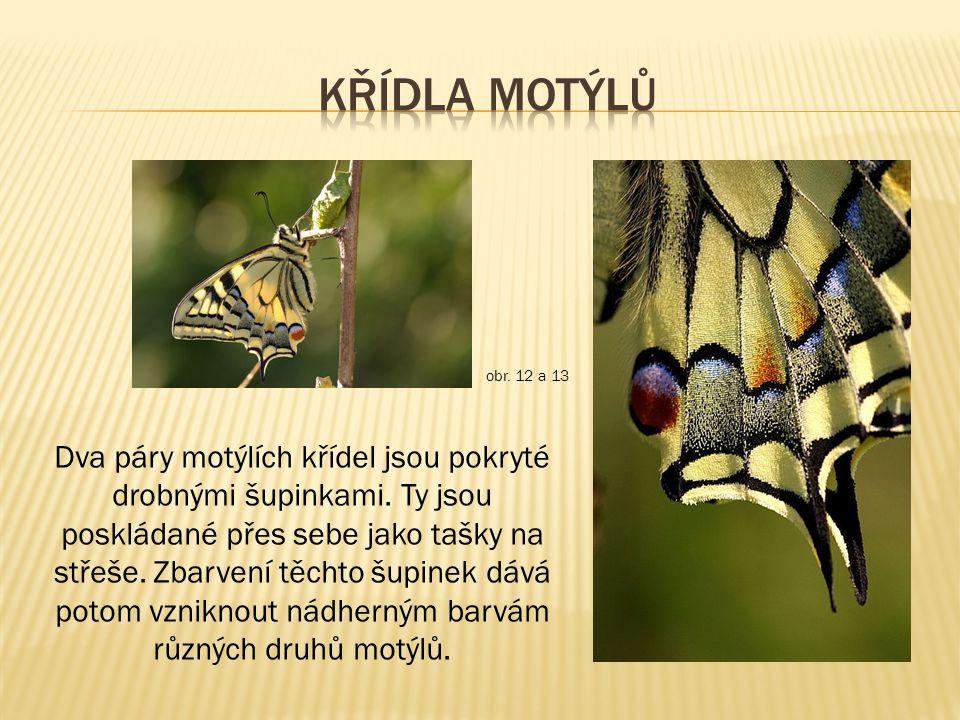 Křídla motýlů obr. 12 a 13.