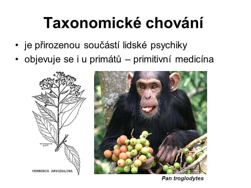 Taxonomické chování je přirozenou součástí lidské psychiky