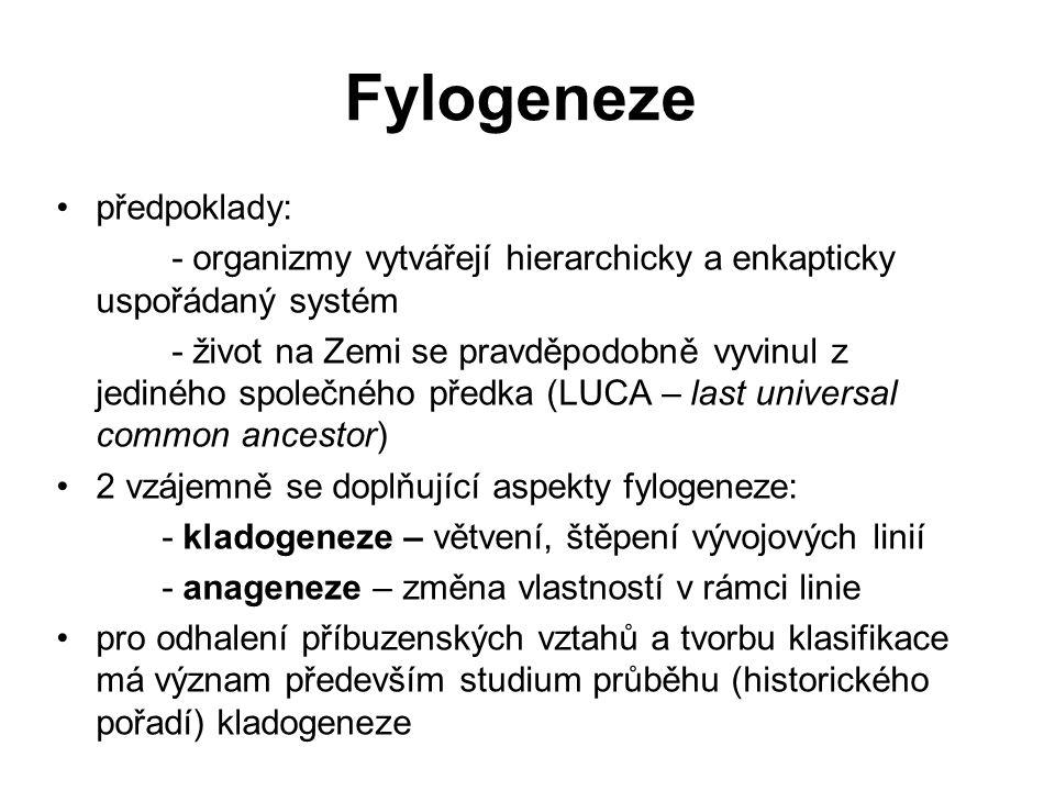 Fylogeneze předpoklady: