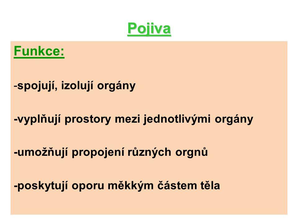 Pojiva Funkce: -spojují, izolují orgány