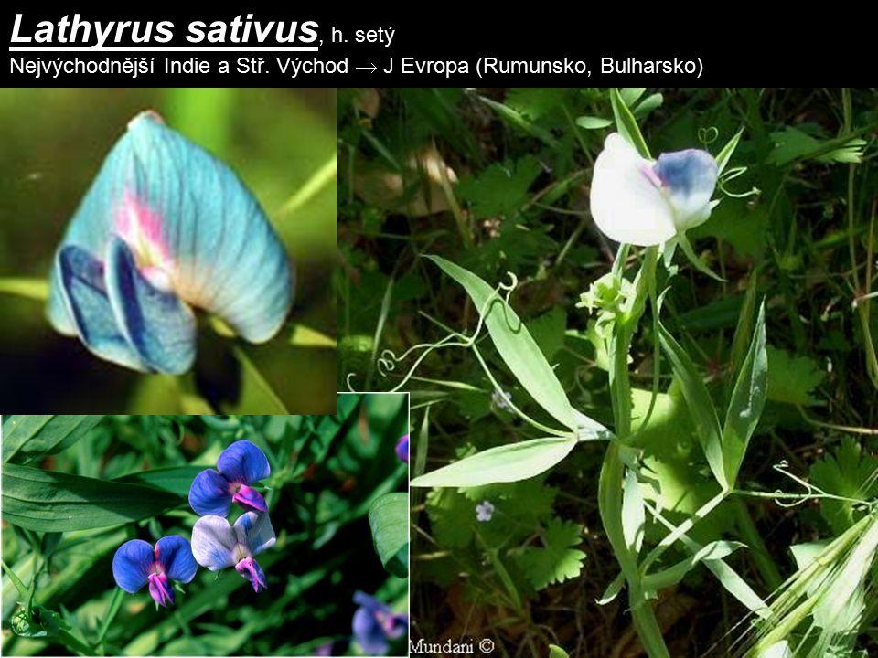 Lathyrus sativus, h. setý