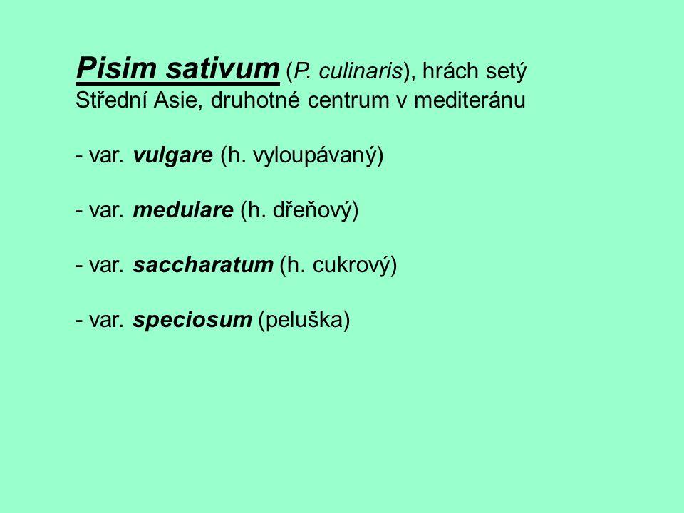 Pisim sativum (P. culinaris), hrách setý